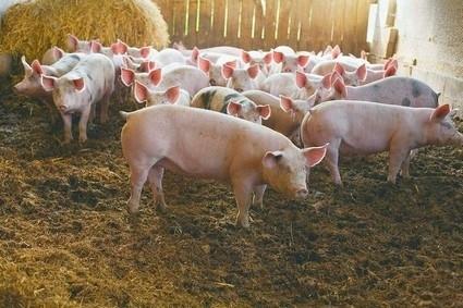 Comment manger éthiquement les animaux?