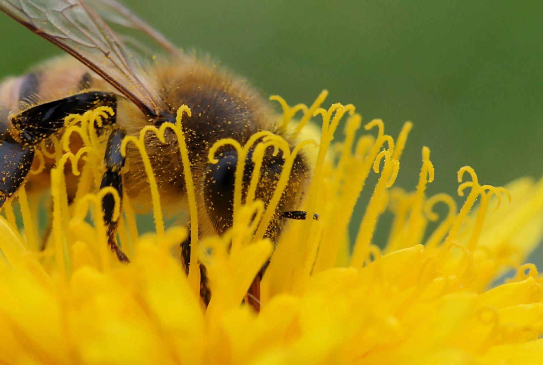 Et si vous parrainiez des abeilles?