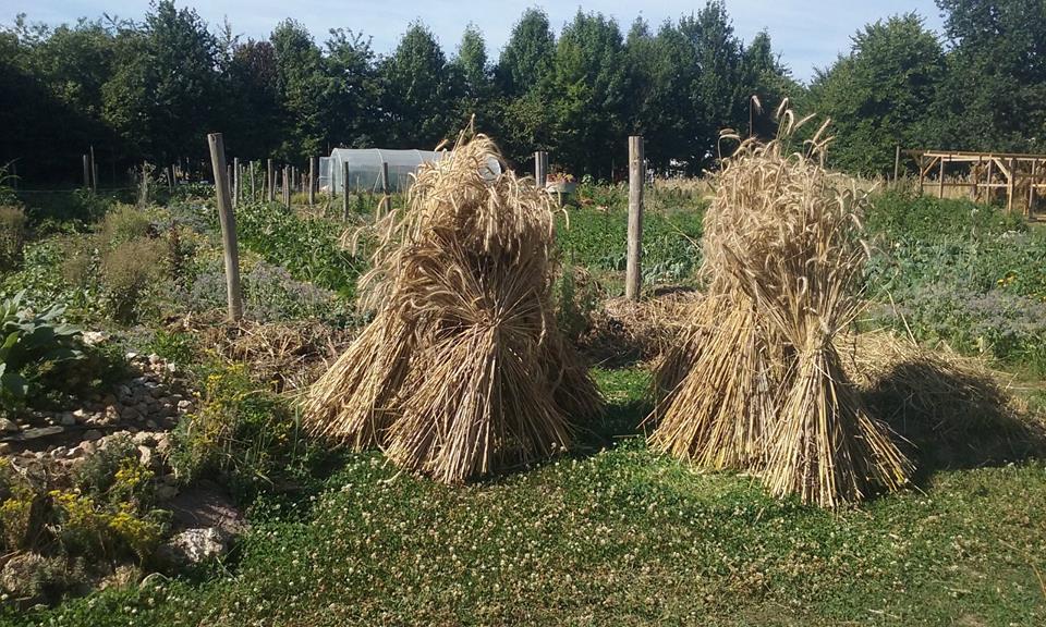 Troisième saison de l'école de permaculture de Perma G'Rennes: les inscriptions sont ouvertes!