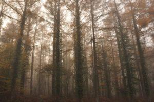 """Causerie """"Des arbres et des Hommes"""",  Abbaye de Bon-Repos @  Abbaye de Bon-Repos"""