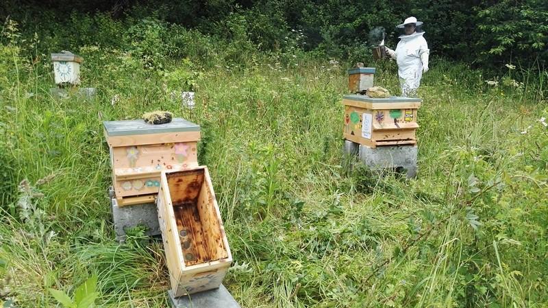 Un crowdfunding pour les ruches de Trégueux et Langueux