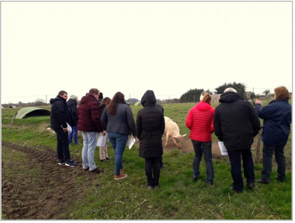 Porc sur paille : actions dans le bassin versant de la Rance