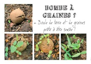 Quimper (29), Atelier eCOlab, Fabrication de bombes à graines @ Al'Terre Breizh