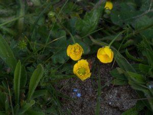 Morlaix (29), Balade nature le long de la voie verte @ Place des Otages