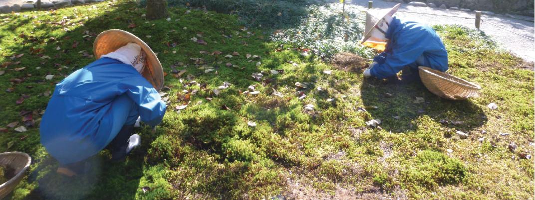 Lanrivain (22), Poétique de la mousse, des jardins japonais aux jardins bretons