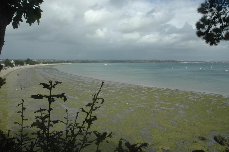 A voir. «L'enfer vert des bretons», un documentaire sur les algues vertes
