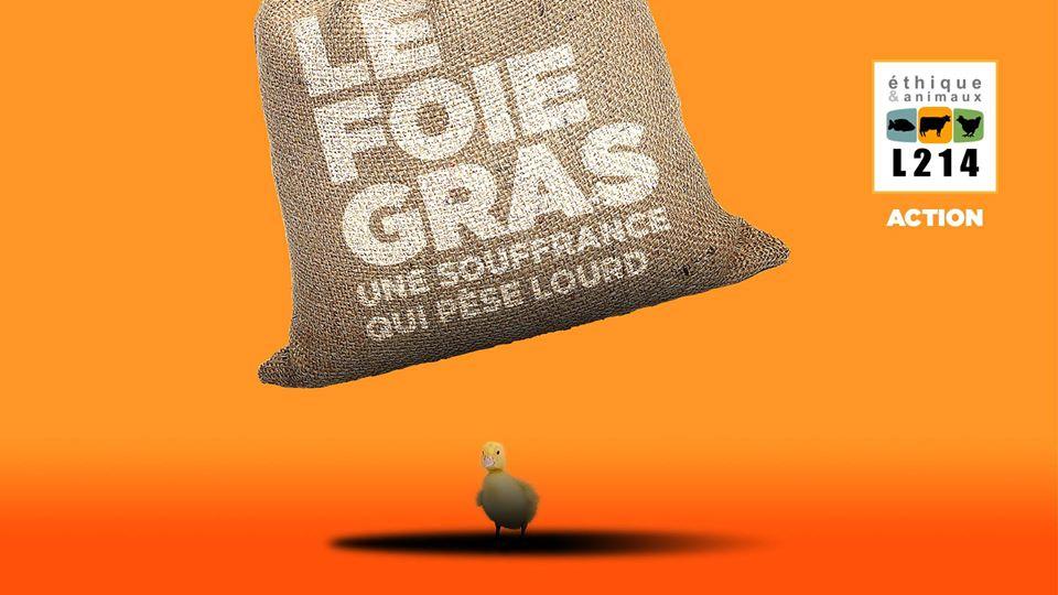 Quimper (29), Le foie gras, une souffrance qui pèse lourd