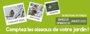 Comptage des oiseaux des jardins 2020