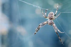 Rennes (35), Sur les traces d'Arachné // Conférence de Christine Rollard @ Espace des Sciences
