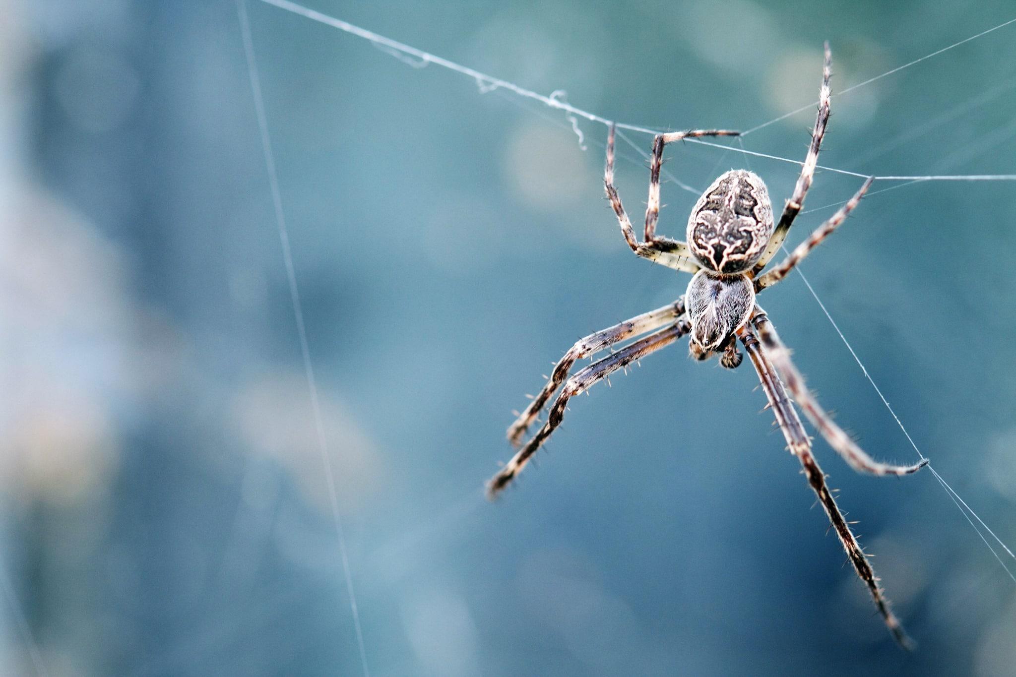 Rennes (35), Sur les traces d'Arachné // Conférence de Christine Rollard