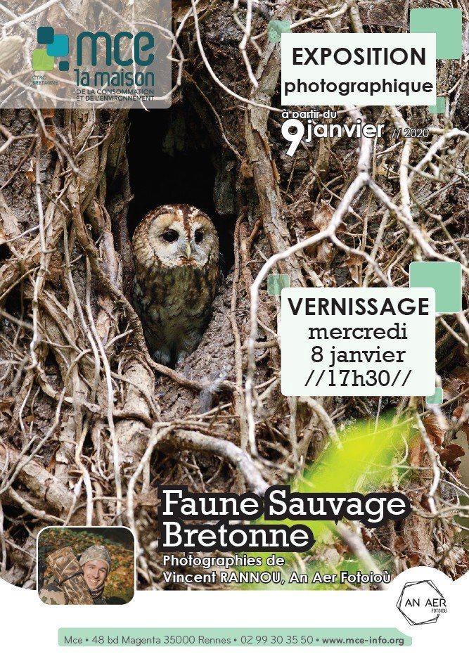 Rennes (35), Faune sauvage bretonne – Expo photos