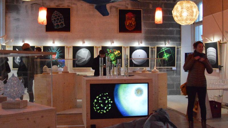 Morlaix (29) : Plankton & Arts, découvrir le plancton à travers l'art et les sciences participatives.