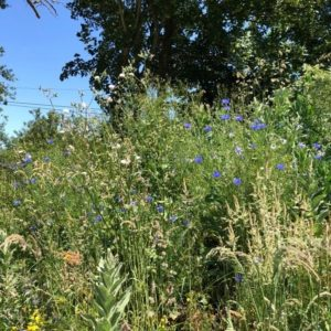 Rennes (35),  Bienfaits des plantes sauvages