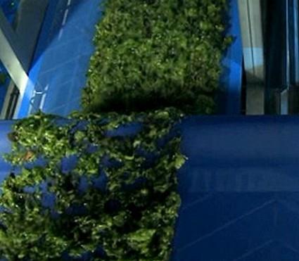 Bio-raffinerie d'algues à Plouenan (29): opportunité ou dérive ?
