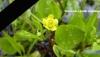 En hommage à Rémi Fraisse, jeune naturaliste mort pour ses idées au Testet