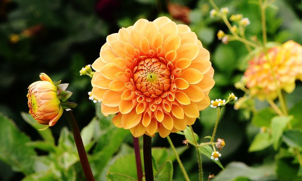 Les fleurs du Golven : des fleurs bretonnes et biologiques