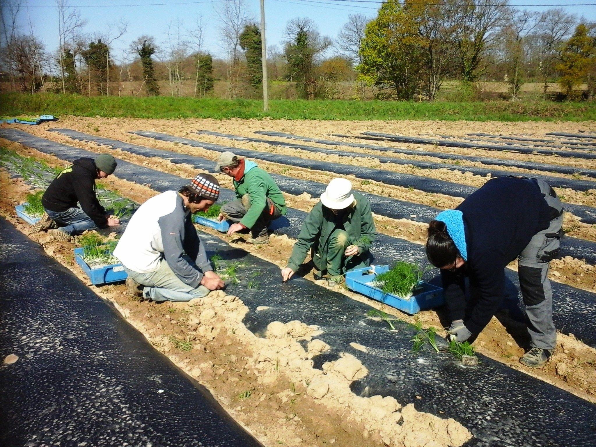 Aux «Champs gourmands», on cultive l'insertion et on fait germer des projets en maraîchage bio.