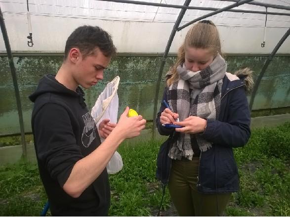 Suscinio : les élèves participent à la connaissance et à la sauvegarde des abeilles.