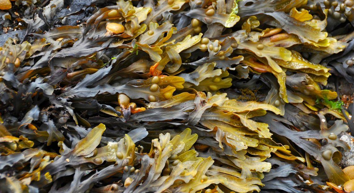 Vertes, rouges ou brunes, les algues possèdent de nombreux bienfaits pour notre santé!