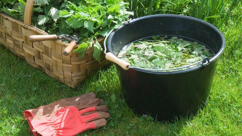 Purin d'ortie pour fortifier son jardin