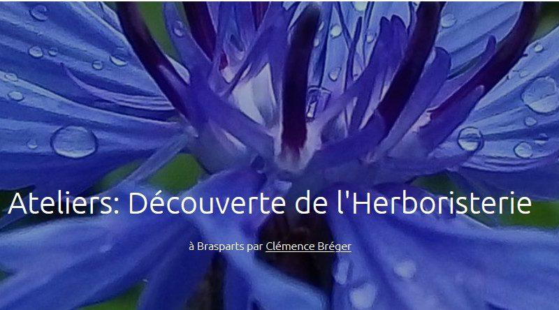 Un financement participatif pour des ateliers itinérants d'herboristerie dans le Finistère