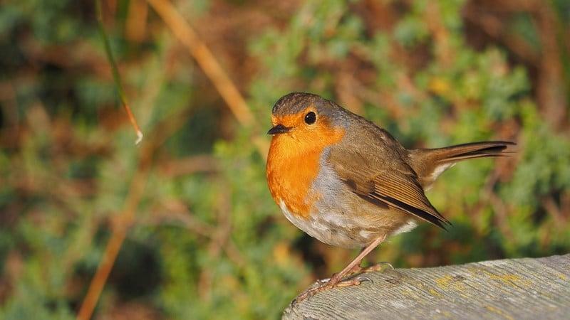 Samedi et dimanche, on compte les oiseaux!