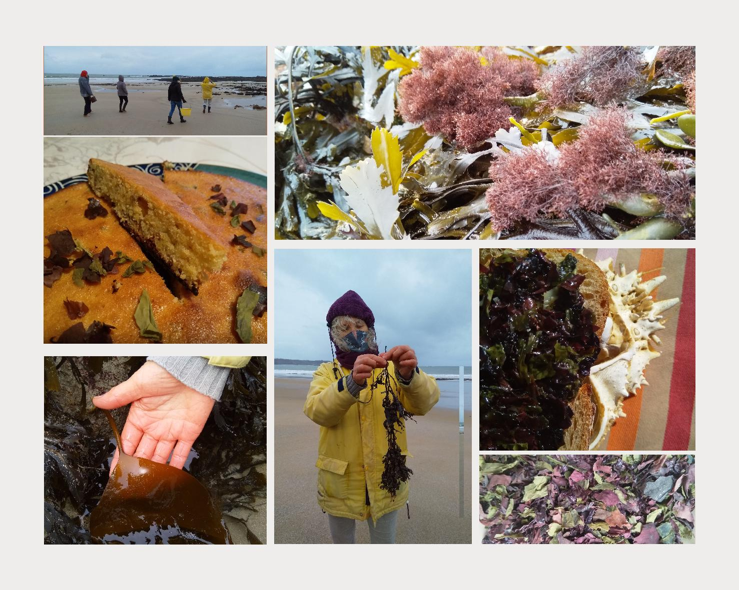 Quand les algues se mettent à table…                  et nous avec!
