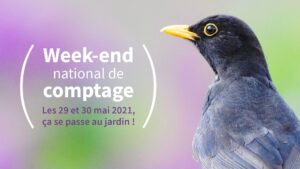 Comptage national des oiseaux des jardins