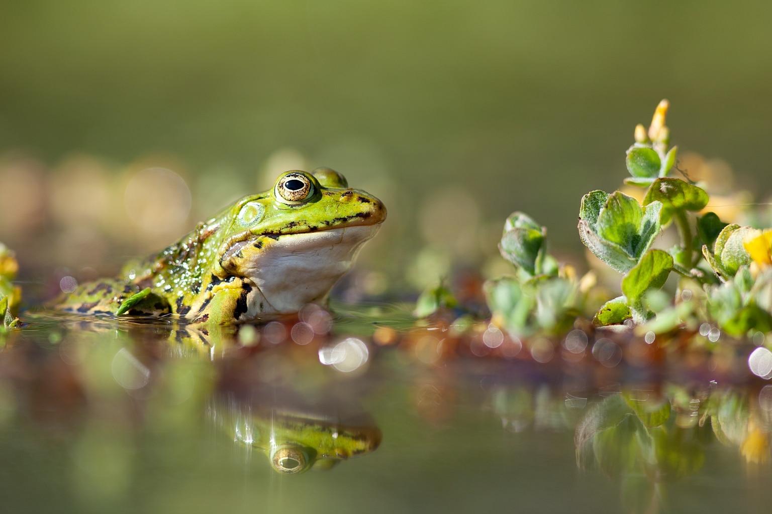 Le Festival de la photo animalière Ti menez Are en attente de beaux clichés des zones humides